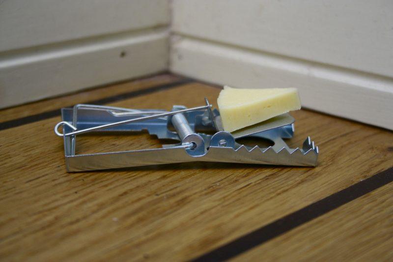 Elokuvissa ja piirretyissä näkee usein hiirenloukuissa käytettävän syöttinä juustoa. – Se ei hyödytä. Juusto kuivuu hyvin nopeasti. Paras syötti hiirille on suklaa, vinkkaa tuholaistorjuja Manu Backman.