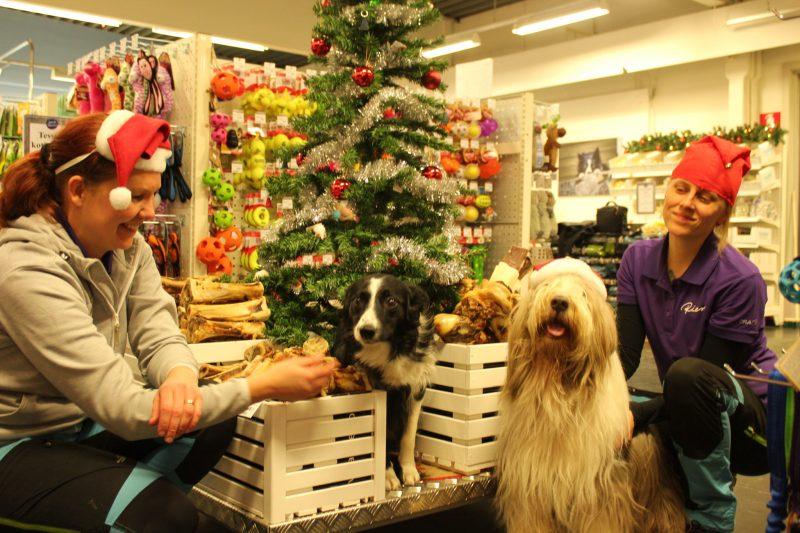 Lemmikkitarvike Riemun kauppias Maarit Karhu-Teiskonen ja myymäläpäällikkö Mila Häkkinen toteavat, että kuusta kannattaa vartioida. – Se voi olla hyvinkin mielenkiintoinen kaikkine koristeineen, naiset naurahtavat.